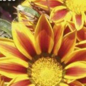 Plantes rares et jardins naturels